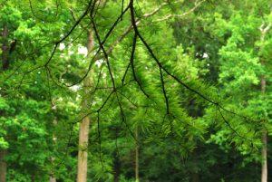 Forêt de Fontainebleau, mare aux Evées :
