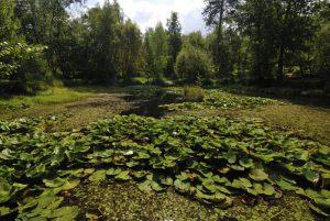 La Mare à Piat<br> Forêt de Fontainebleau
