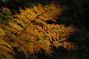 La Mare à Dagneau<br> Forêt de Fontainebleau