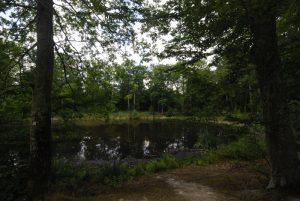 La mare aux Evées<br> Forêt de Fontainebleau