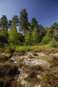La mare aux Couleuvreux<br> Forêt de Fontainebleau