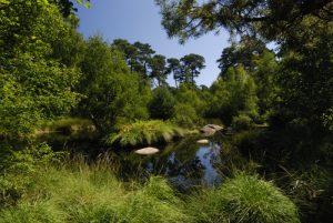 La mare aux Pigeons<br> Forêt de Fontainebleau