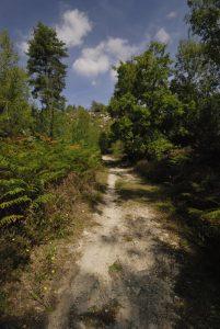 La Platière du Coquibus<br> Forêt de Fontainebleau