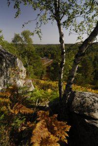 Les Gorges d'Apremont avec les couleurs chatoyantes d'Automne<br> Forêt de Fontainebleau