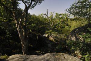 Point de vue de la Caverne du Brigand<br> Les Gorges d'Apremont<br> Forêt de Fontainebleau