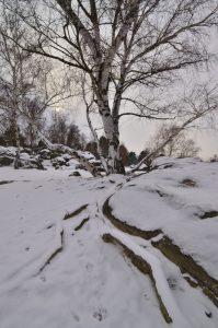 Les sables du cul du chien sous la neige<br> Les 3 pignons<br> Forêt de Fontainebleau