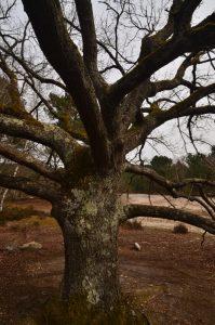 La Canche aux Merciers Sentier n°16 de la Maison Poteau Forêt de Fontainebleau