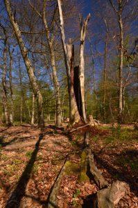 Mare à Piat Forêt de Fontainebleau