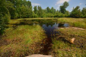 L'Œillet de Séguier ou sylvestre (Dianthus seguieri)<br> Le chemin de crête du Puy de la Tache &amp; le Puy de l'Angle<br> Parc Naturel Régional des Volcans d'Auvergne