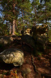 La Mare aux Couleuvreux<br>Forêt de Fontainebleau