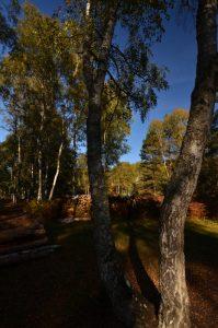 Les Gorges d'Apremont en Automne<br>Forêt de Fontainebleau