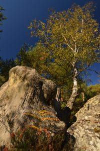 Les Gorges d'Apremont en Automne Forêt de Fontainebleau