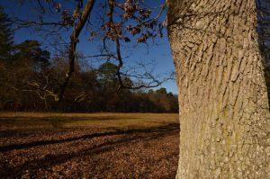 Chênes remarquables<br> Les Gorges de Franchard<br> Forêt de Fontainebleau