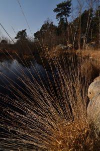 Les Mares des Couleuvreux<br> Forêt de Fontainebleau
