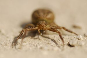 Araignée -  La mare de la ferme du Coquibus -  Forêt de Fontainebleau