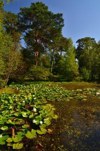 La Mare à Piat Forêt de Fontainebleau