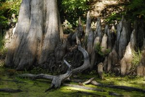 La Mare aux Cerfs -  Forêt de Fontainebleau