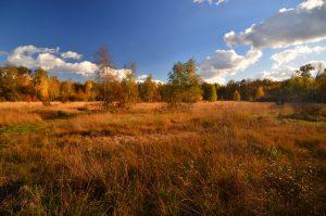 Savane aux couleurs automnales près de la Mare à Bauge -  Forêt de Fontainebleau