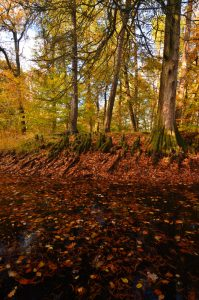 La mare à Bauge aux couleurs automnales -  Forêt de Fontainebleau