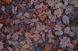 Feuillles mortes -  La mare à Bauge en Automne -  Forêt de Fontainebleau