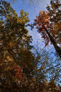 La Mare aux Evées aux couleurs automnales -  Forêt de Fontainebleau