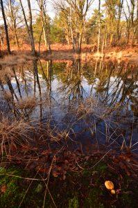 Mare près de la Mare à Piat<br> Forêt de Fontainebleau