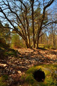 Les 3 Pignons - Forêt de Fontainebleau