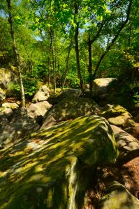 Chaos de Grès<br> Circuit des 25 bosses<br> Forêt domaniale des Trois Pignons