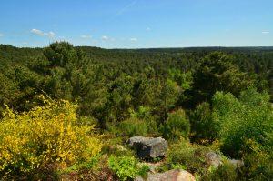 Circuit des 25 bosses<br> Forêt domaniale des Trois Pignons