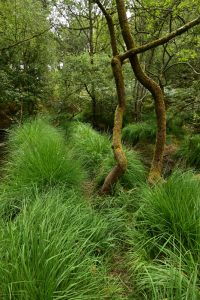 Mare Marcou<br> Sentier de Recloses<br> Forêt de Fontainebleau
