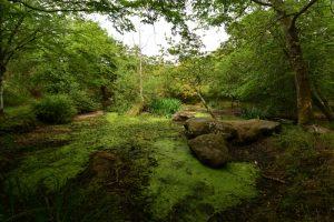 Mare à la Ricarde<br> Sentier de Recloses<br> Forêt de Fontainebleau