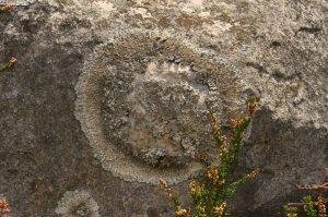Lichen<br> Le plateau du Coquibus<br> Forêt domaniale de Fontainebleau