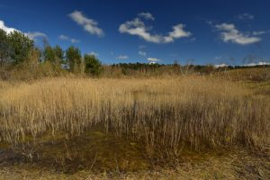 La mare de la Plaine de Chanfroy<br> Forêt de Fontainebleau