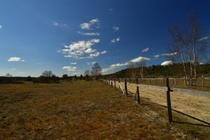La Plaine de Chanfroy<br> Forêt de Fontainebleau