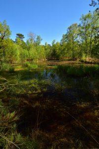 Mare du chemin des Béorlots (Parcelle n°162)<br> Forêt de Fontainebleau