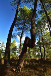 La Canche aux Merciers<br> Forêt des Trois Pignons