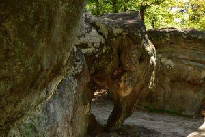 Le Rocher Éléphant d'Apremont<br> Gorges &amp; platières d'Apremont<br> Forêt de Fontainebleau