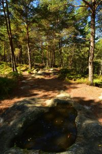 Gorges &amp; platières d'Apremont<br> Forêt de Fontainebleau