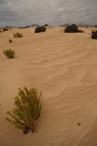 Les Dunes de Corralejo. Île de Fuerteventura (Islas Canarias).