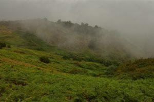 La Laurisylve du Pico Osorio<br> Parque Rural de Doramas Île de Grande Canarie