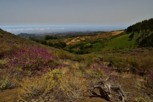 Le volcan Montaña Negro<br> Paysaje Protegido de Las Cumbres<br> Île de Grande Canarie