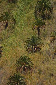 Point de vue Degollada de las Yegas sur la vallée de Fataga<br> Paraje Protegido de Fataga<br> Île de Grande Canarie