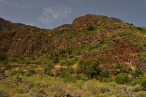 Les gorges de Guayadeque<br> Monumento Natural de Barranco de Guayadeque<br> Île de Grande Canarie