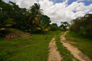 La Trace de Beautiran -  Grande-Terre / Guadeloupe