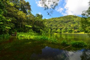 Le Grand Etang -  Parc national de la Guadeloupe - Basse-Terre / Guadeloupe
