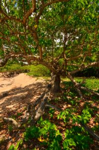 La Pointe Allègre - Guadeloupe