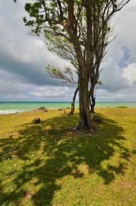 La Pointe Allègre -  Basse-Terre / Guadeloupe