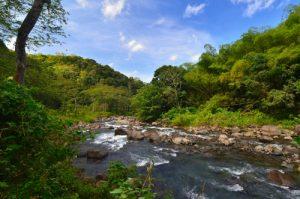 Rivière des Vieux-Habitants -  Basse-Terre / Guadeloupe