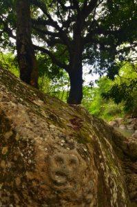 Site des Roches Gravées par les indiens Caraïbes -  Guadeloupe