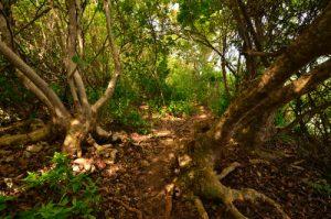 Bois du Bois-Jolan -  Guadeloupe